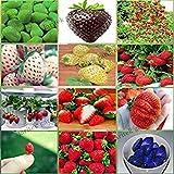 12 confezioni diversi semi di fragola (verde, bianco, nero, rosso, blu, giganti, Mini, Bonsai, Normale Rosso, Pineberry) E3508