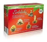 Creano ErblühTee BIO im Original - Weißer Tee