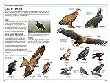 Vögel in Europa: Über 500 Arten mit Vogelstimmen-CD - 3