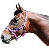 Harry Hall Galaxy - Cabezada para caballo rosa rosa Talla:Pony
