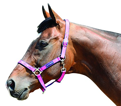 Harry Hall Galaxy Licol pour cheval Rose Rose Poney Hall Rose