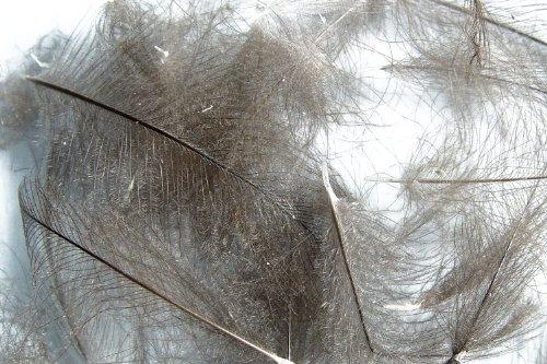 1g - plumes de CDC (Cul de Canard) GRIS FONCE - pour montage de mouche de peche