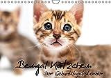 Bengal Kätzchen - Der Geburtstagskalender (Wandkalender 2019 DIN A4 quer): Geburtstagskalender mit Bengalkitten über das gesamte Jahr (Geburtstagskalender, 14 Seiten ) (CALVENDO Tiere)