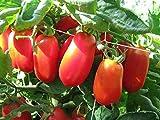 Las Semillas de germinación: 50 - Semillas: Semillas de Tomate Pompeya - Una Variedad de Italia. !! Son Muy Sabrosa. !!