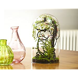 Terrarium Vert+Sauvage