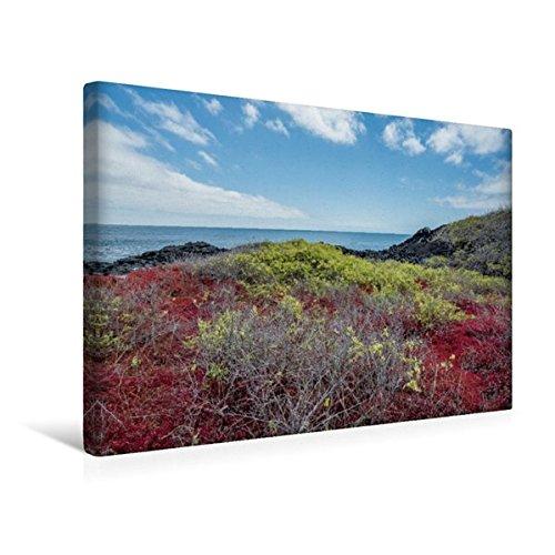 Calvendo Premium Textil-Leinwand 45 cm x 30 cm Quer, Typische Vegitation - Isla South Placa | Wandbild, Bild auf Keilrahmen, Fertigbild auf Echter Leinwand, Leinwanddruck Orte Orte