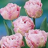 Portal Cool 30: Double Late Angelique Rose Pivoine Primtemps vivace Tulipe Bulbes