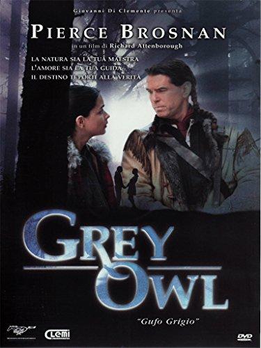 Grey owl - Gufo grigio [IT Import]