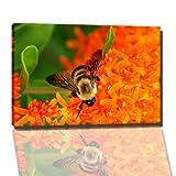 Biene Bild auf Leinwand -- 60 x 40 cm fertig gerahmte Kunstdruckbilder als Wandbild - Billiger als Ölbild oder Gemälde - KEIN Poster oder Plakat