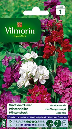 Vilmorin 5286041 Giroflée d hiver, Multicolore, 90 x 2 x 160 cm