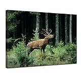 Kunstdruck - Hirsch - 80x60 cm - Bilder als Leinwanddruck - Wandbild von Bilderdepot24 - Tierwelten - Waldtier - Rotwild - röhrender Hirsch im Wald
