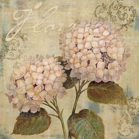 feelingathome-imprimer-sur-toile-100coton-flora-b-cm67x67-affiche-reproduction-gravure