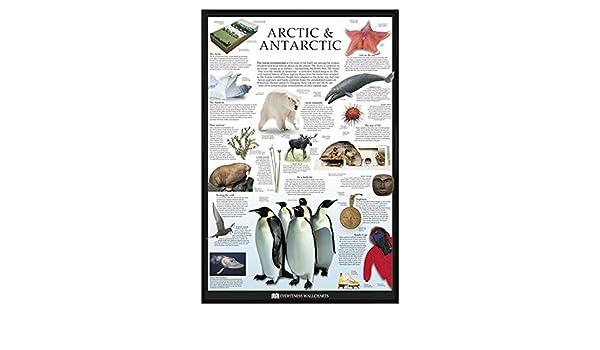 Arctic Antartic Poster Dorling Kindersley 61x91.5cm
