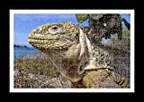 Puzzle stile (preconfigurati) Stampante muro di Galapagos Land Iguana by Lisa Loft