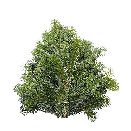Echte Tannenzweige Bio Nordmanntanne - grünes Tannengrün frisch vom Gärtner - allergikergeeignet, lange haltbar - Pflanzen-Kölle