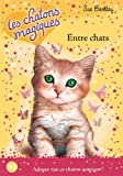 Entre chats / Sue Bentley | Bentley, Sue. Auteur