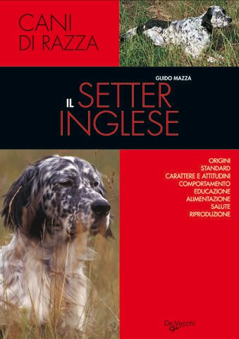 Il setter inglese