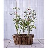 Canasto de fruta antigua, jardinera de madera 63x45x29 cm VINTAGEBOX, color natural