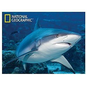 National Geographic NG28543 - Póster Infantil de tiburón Blanco
