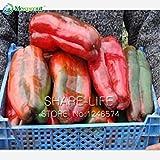 100 semillas / paquete siembra gigante pimienta dulce, Fácil Cultivo Semillas de pimentón chile jardín de DIY de plantas hortícolas