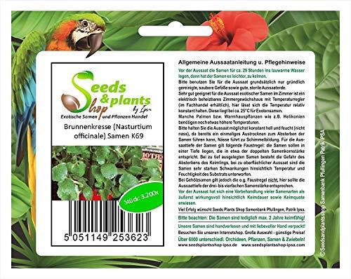 Stk - 3200x Brunnenkresse (Nasturtium officinale) - Kresse Samen Kräuter K69 - Seeds Plants Shop Samenbank Pfullingen Patrik Ipsa