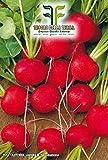 840 C.ca Semi Ravanello Saxa 2 Sel - Red Comet - Raphanus sativus In Confezione Originale Prodotto in Italia - Ravanelli