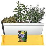 Hentschke Keramik Spar Set: Balkonkasten Fensterkasten + Untersetzer + FlowerPad 38 x 19 x H 17 cm, weiß, 259.038.04 - Made in Germany