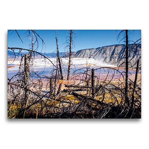 Calvendo Premium Textil-Leinwand 75 cm x 50 cm quer, Toter Wald Yellowstone NP, USA | Wandbild, Bild auf Keilrahmen, Fertigbild auf echter Leinwand, Leinwanddruck Natur Natur -