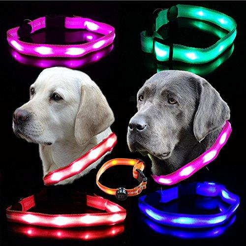 hundeinfo24.de Hunde Leuchthalsband LED Blinkhalsband für Leuchtschlauch leuchtendes Hundehalsband Blinki Sicherheits-Hundehalsband , Farben:Pink