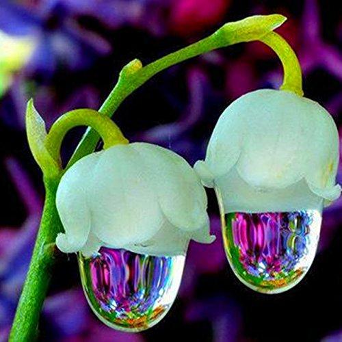 50 pcs / sac Muguet Graines de fleurs rares Indoor de Bell Orchidée arôme riche Bonsai plantes en pot Balcon bricolage jardin rouge