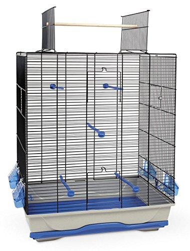 oiseaux oiseaux bleu achat vente de oiseaux pas cher. Black Bedroom Furniture Sets. Home Design Ideas