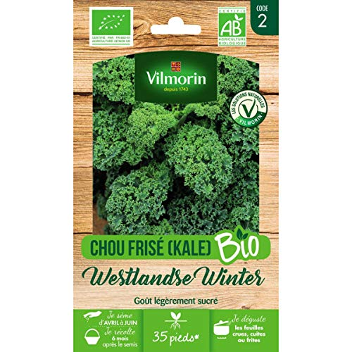 Vilmorin - Sachet graines Chou Frisé (KALE) Westlandse Winter BIO - Brassica oleracea var. sabellica