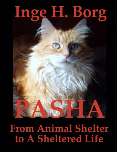 Pasha, From Animal Shelter to A Sheltered Life (English Edition) (Live Fallen Für Katzen)