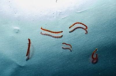 WFW wasserflora 5 x 90 ml Lebendfutter, Lebende Rote Mückenlarven/Chironomus spec. - große Beutel