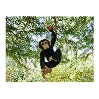 Best Value Here Hanging Chimpanzee Resin Garden Ornament Chimp Sculpture Realistic Replica Animal Decor NEW (Hanging Monkey)
