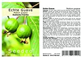 Seedeo® Echte Guave (Psidium guajava) 100 Samen