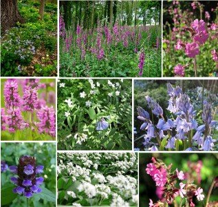 wildflower-woodland-mix-seeds-wildflower-shade-mix-10-grams-only-flowers