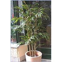 Suchergebnis Auf Amazon De Fur Kunstlicher Bambus Garten