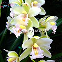 30 semi Unico rosa Cymbidium fiore Semi Garden Flowers Pots Camera Semi piante da fiore Orchid Seed Flores Plantes Heirloom