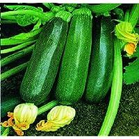 Portal Cool Vegetales - calabacín - Negro Milán - 300 Semillas - Grande