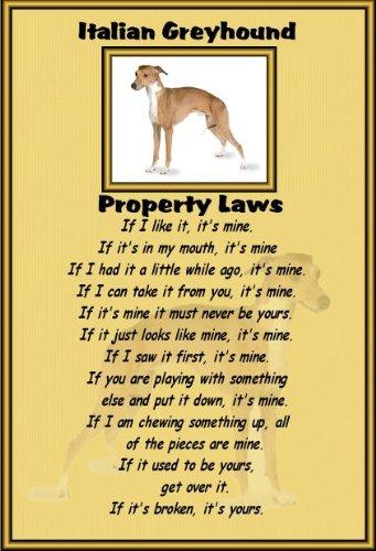 italian-greyhound-laminato-cartello-formato-a4-con-scritta-property-disposizioni-legislative