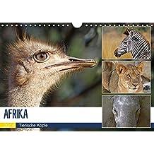 AFRIKA - Tierische Köpfe (Wandkalender 2018 DIN A4 quer): Porträts in freier Wildbahn (Monatskalender, 14 Seiten ) (CALVENDO Tiere) [Kalender] [Jun 01, 2017] Woyke, Wibke