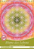 Blume des Lebens - Harmonie durch Symbolkraft (Tischkalender 2019 DIN A5 hoch): Heilende Energien mit der Flower of Life (Monatskalender, 14 Seiten ) (CALVENDO Kunst) - Gaby Shayana Hoffmann