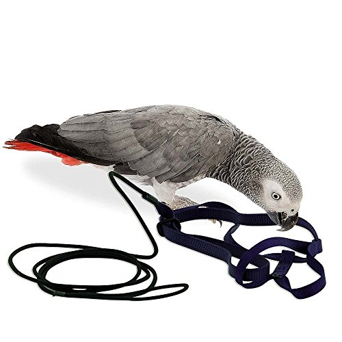 Das AVIATOR Vogel Geschirr & Lein - Made in America