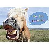 12 Pferde Einladungskarten (Set 2) Lustig Zum Kindergeburtstag   Einladungen  Zum Geburtstag Für