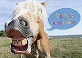 12 lustige Pferde-Einladungskarten (Set 2) / Geburtstagseinladungen Kinder Mädchen Jungen zum Kindergeburtstag - Einladungen zum Geburtstag von EDITION COLIBRI (10779)