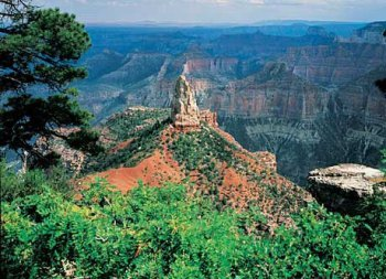 Grand Canyon - North Rim 550 Piece Puzzle by American Puzzles