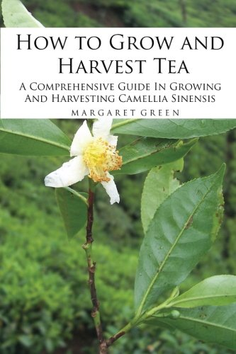 How to Grow and Harvest Tea: A Comprehensive Guide In Growing And Harvesting Camellia Sinensis: Volume 1 (Growing And Using Herbs)