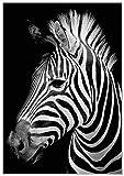 Panorama® Poster Zèbre 50x70cm | Imprimée sur Poster de Grande qualité | Poster Animaux | Poster Zen | Moderne Art pour la Maison | Décoration Murale | Image Artistique | Poster Art