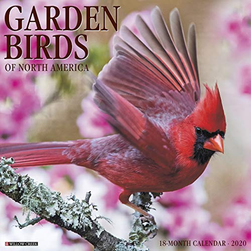 Garden Birds 2020 Calendar
